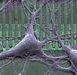 Rat-Neuron on Chip